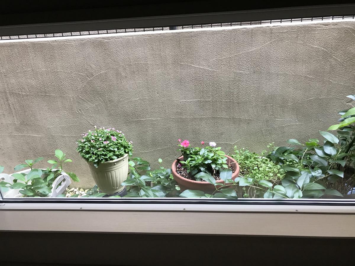 1階右チェア前 - ピンクのエキザカムとピンク濃淡の日々草