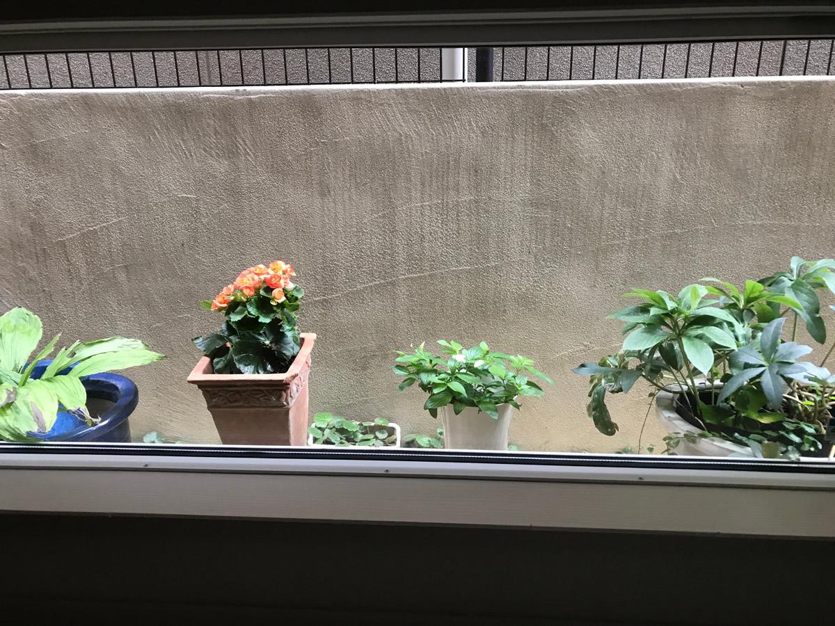 1階左チェア前 - オレンジベゴニアと、ハンカチ草の白い花の脇から黄色の4弁の小花が