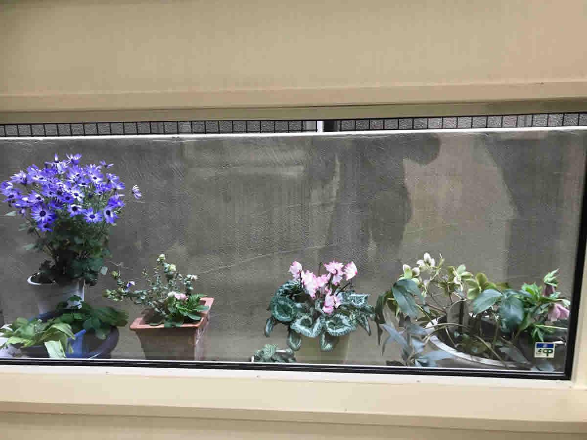 1階左チェア前 - 左 サイネリア 中 11月から咲いているプリムラジュリアン 薔薇咲 オレガノケントビューティー 右 シクラメン 右端 薄緑色のそばに淡いピンクのクリスマスローズも咲きました