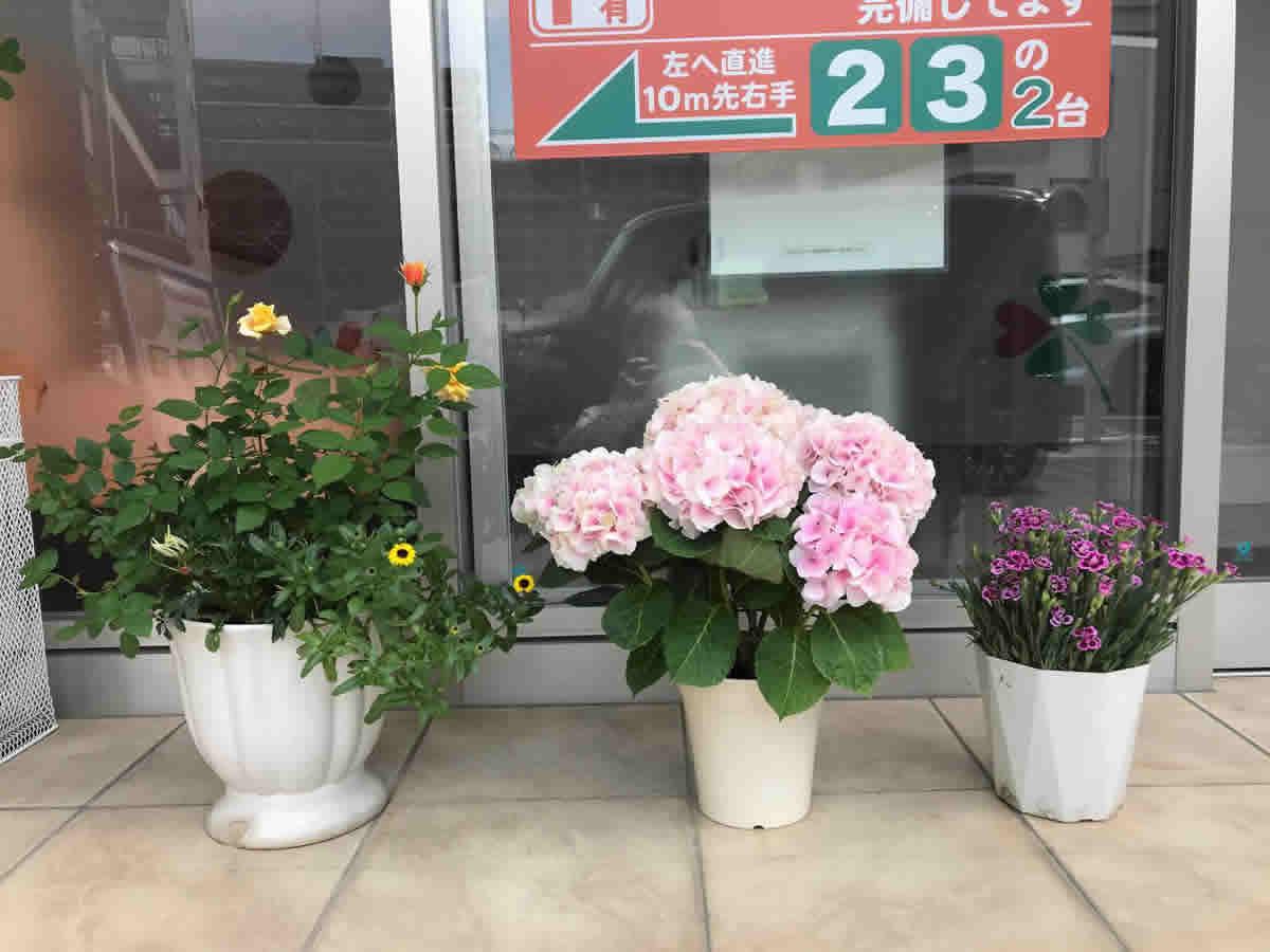 入口 - 薔薇と紫陽花にピンクキッスと言う名の撫子