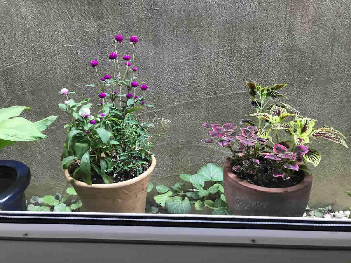右チェア前 - 左 千日紅ローズネオン 混色植 ユーフォルビア ダイアモンドフロスト、右 コリウス ブラックマジック トキメキリンダ ホットビート