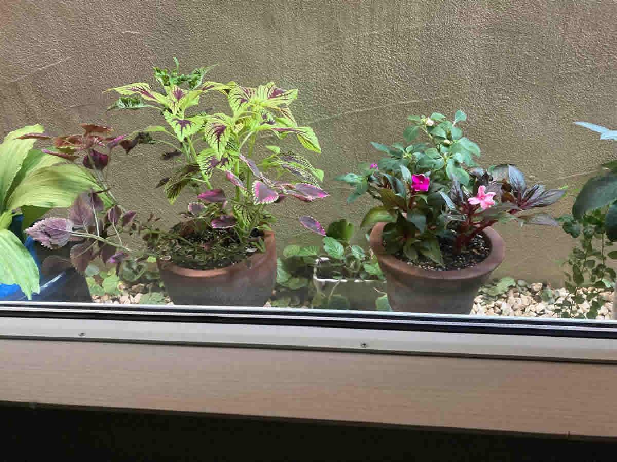 1階右チェア前 - 左・カロライナジャスミンと日々草、夏花火のホワイトレッドアイとコーラル、右・撫子テルスター3色と京チュラカ、イルミネーション