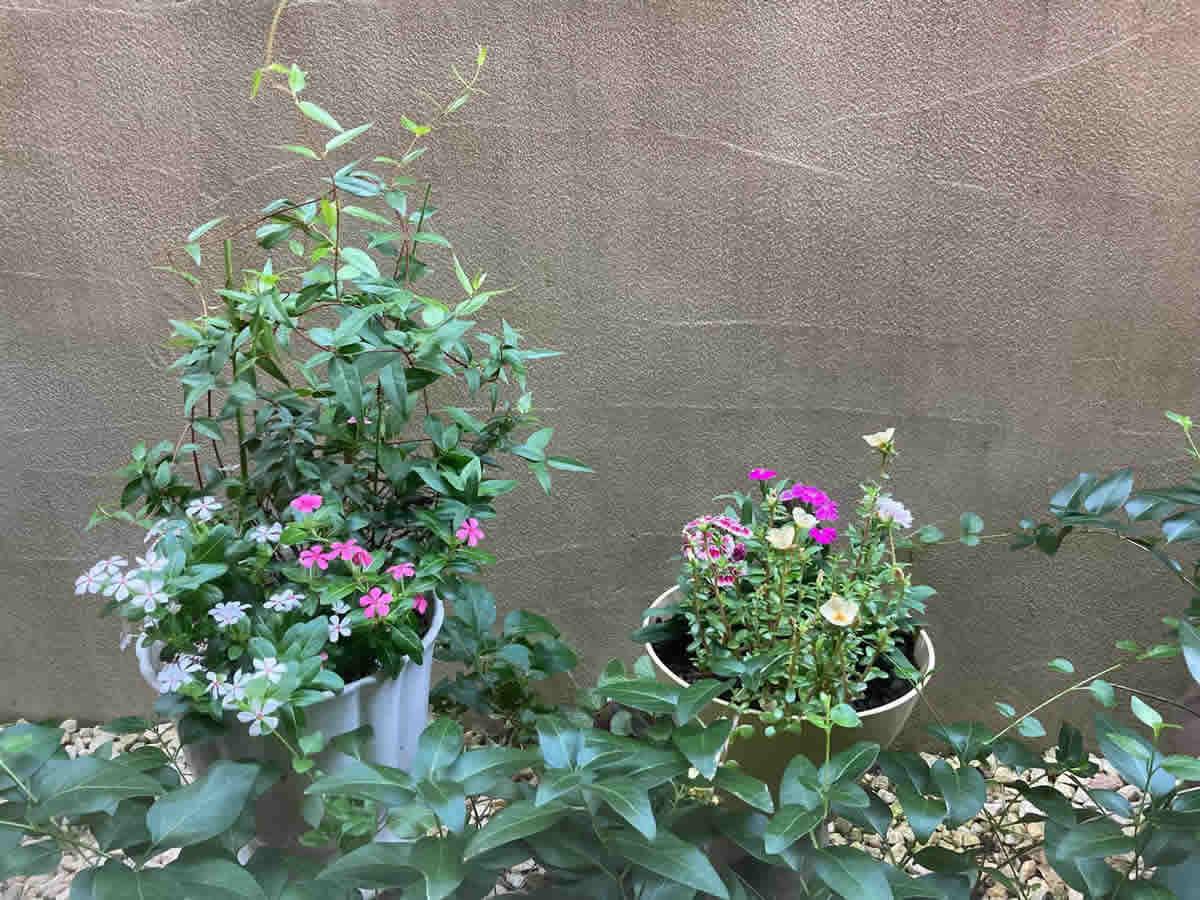 1階左チェア前 - 左・コリウスときめきリンダ、ホットビート、ブラックマジック、右・薔薇咲きインパチェンス、フィエスタグランデ サンパティオパープルとブラッシュピンク